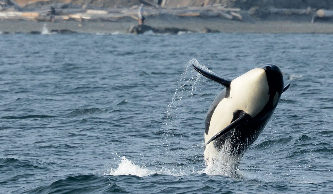 Give them Freedom: Whale Captivity
