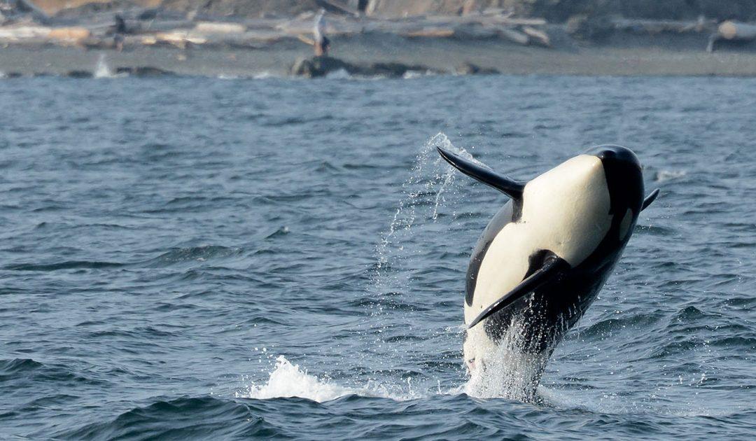 Give them Freedom: Whale Captivity